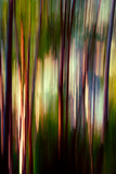 Trees Photographic Print by Ursula Abresch
