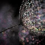 Chandelier Fotoprint van Ursula Abresch