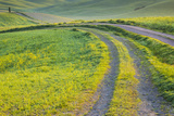 The Road Less Travelled 2 Photographic Print by Art Wolfe
