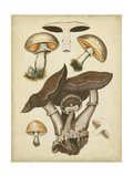 Antique Mushrooms II Posters by H. Furrer