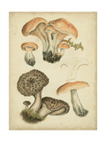 Antique Mushrooms I Prints by H. Furrer
