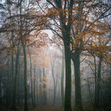 Forest Mood Photographic Print by Philippe Manguin
