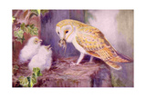 1950s UK Barn Owls Magazine Plate Giclee Print