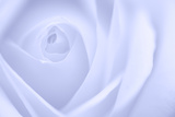 Soft Rose 3 Photographic Print by Doug Chinnery