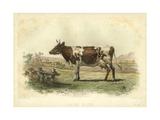 Vache D'Ayr Prints by I. Bonheur