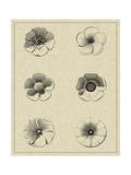 Floral Rosette I Prints by  Vision Studio