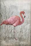 American Flamingo I Giclee Print by Tim O'toole
