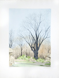 Barren Tree Collectable Print by  Salart