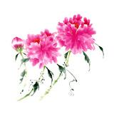 Peonies in Pink III Prints by Nan Rae