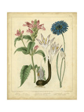 Garden Flora VIII Prints by Sydenham Edwards