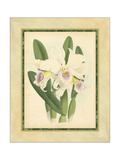 Fitch Orchid II Prints by  Fitch