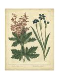 Garden Flora VII Plakat af Sydenham Edwards