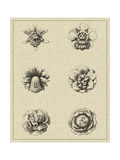Floral Rosette III Prints by  Vision Studio