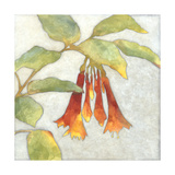 Fuchsia Blooms I Prints by Megan Meagher