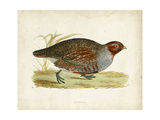 Morris Pheasants I Affiches