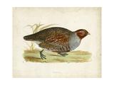 Morris Pheasants I Prints