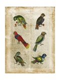 Antiquarian Parrots I Posters by  Vision Studio