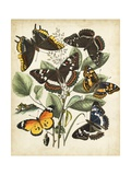 Non-Embellished Butterfly Haven II Prints by  Vision Studio