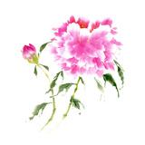 Peonies in Pink II Print by Nan Rae