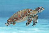 Ocean Sea Turtle I Art by Tim O'toole