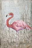 American Flamingo II Poster af Tim O'toole