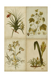 Botanical Montage II Prints by  Vision Studio