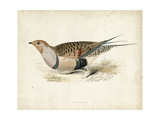 Morris Pheasants V Affiches