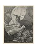Woodland Deer VIII Print by  Ridinger