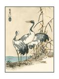 Oriental Crane II Prints by  Vision Studio