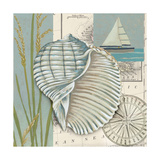 Seaside Shell I Prints by Chariklia Zarris