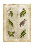 Antiquarian Parrots II Poster von  Vision Studio
