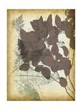 Leaf Letters I Prints by Jennifer Goldberger