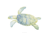 Tranquil Sea Turtle II Prints by Megan Meagher