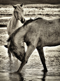 Beach Horses I Photographic Print by David Drost