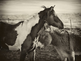 Kissing Horses II Photographic Print by David Drost