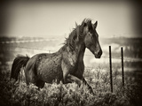 Running Horse Photographic Print by David Drost