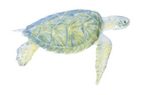 Tranquil Sea Turtle I Poster by Megan Meagher