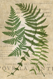 Fern Folio I Art by  Vision Studio