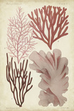 Seaweed Specimen in Coral III Posters by  Vision Studio