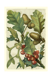Fruits and Foliage II Prints by  Vision Studio