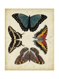 Display of Butterflies I Poster von  Vision Studio
