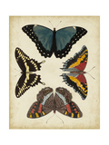 Display of Butterflies I Posters by  Vision Studio
