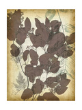 Leaf Letters II Posters by Jennifer Goldberger