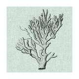 Serene Coral III Prints by  Vision Studio