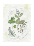 Parsley and Sage Prints by Elissa Della-piana