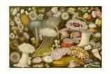 Sea Anemone Panorama Poster