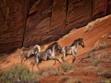 Running Horses II Photographic Print by David Drost