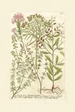Garden Varietals I Poster von Johann Wilhelm Weinmann