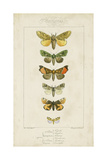 Pauquet Butterflies II Posters by  Pauquet