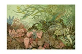 Seaweed Panorama Prints